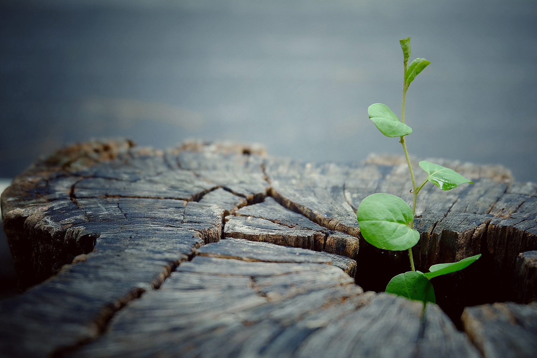 Thriving amidst change: after every ending is a new beginning; a chance to start over again