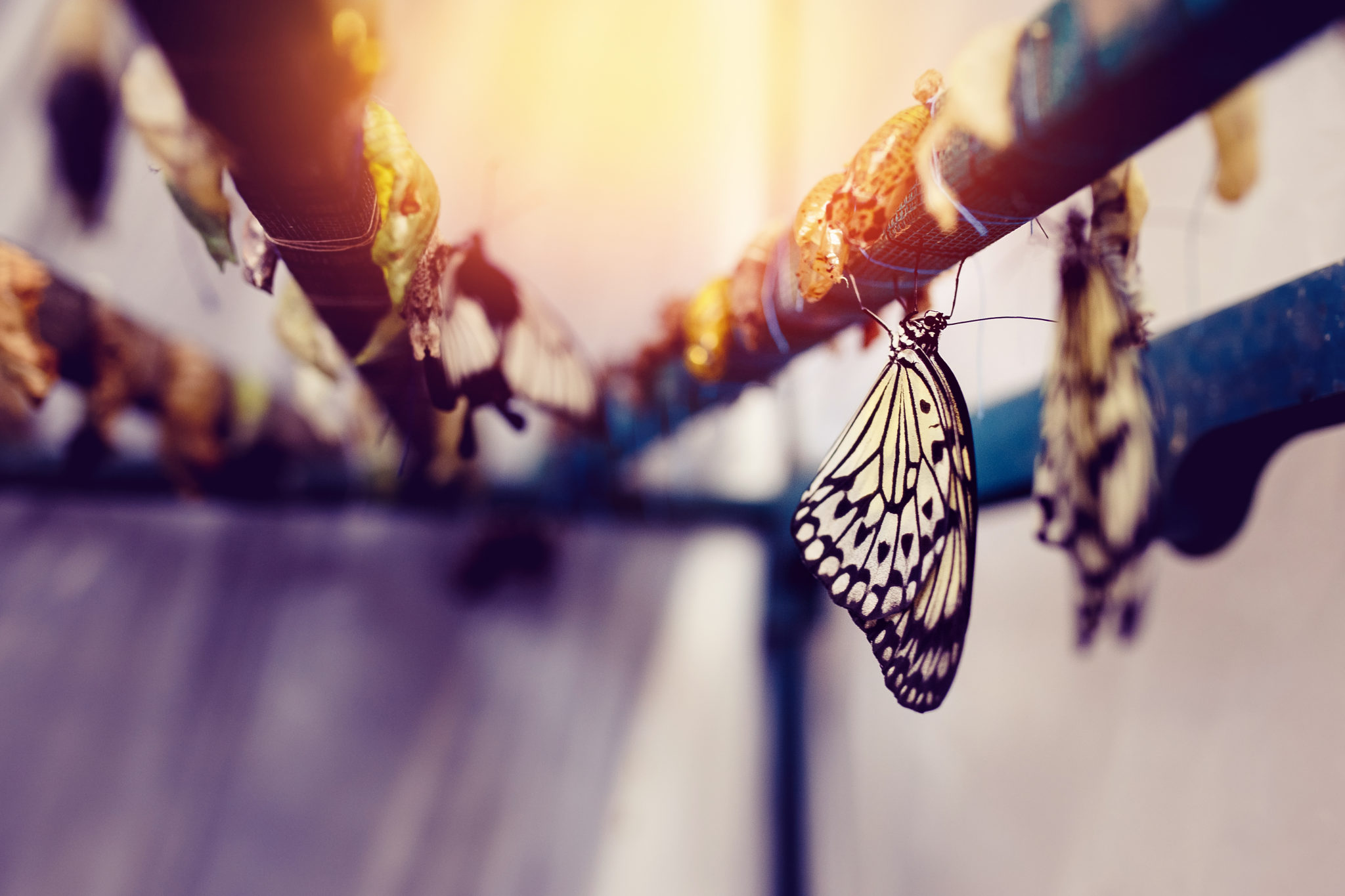 Birth of the Butterfly: Our Inner Fuels for Change and Transformation