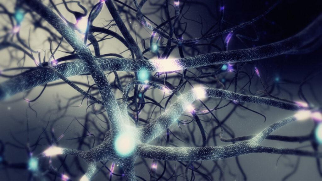 neurons-human-brain