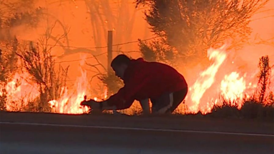 california-man-saves-rabbit-from-fire