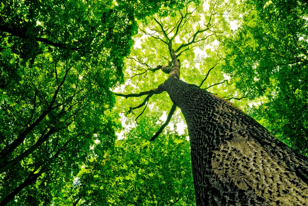 tree-transcending-objects-to-find-peace