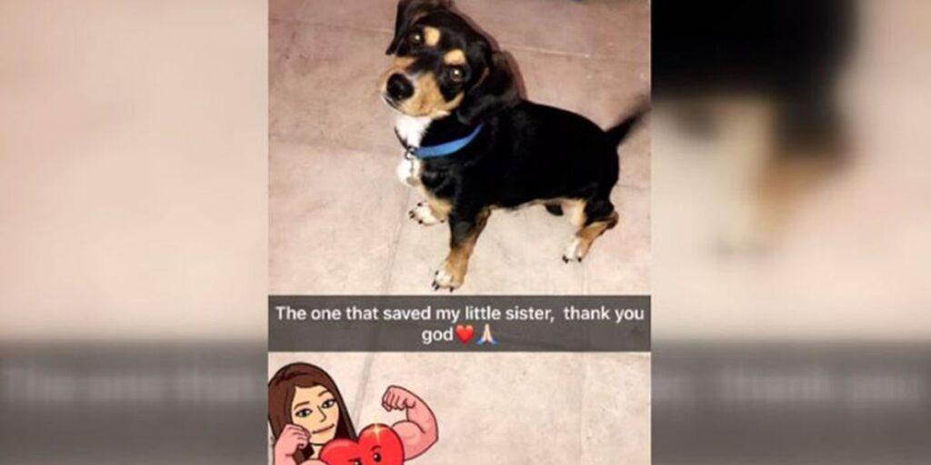 beagle-saves-young-girl